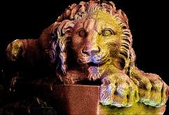 Lion1-1